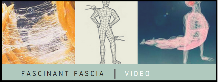 Fascia-thérapie-Biarritz massage